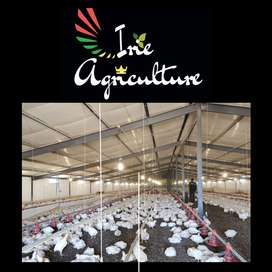 Broiler Chicken - Irie Agriculture