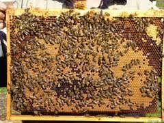 Продам пчелопакеты апрель - 2019 г