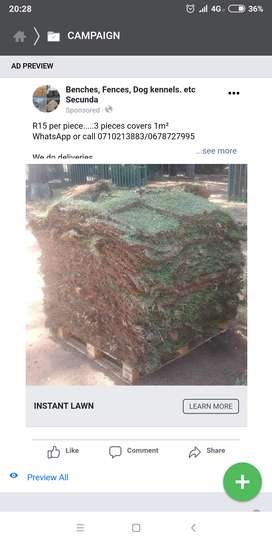 Instant lawn grass
