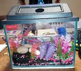 Fish tank with canopy 305mm x 225mm. With accessories