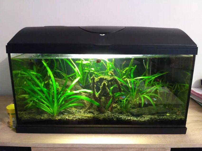 Akvárium s vybavením a rybičkama 0