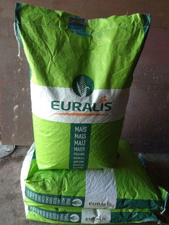 Насіння кукурудзи Євраліс семена кукурузы Euralis Евралис Милорд