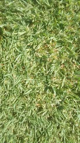 PROFESSIONAL INSTANT LAWN SUPPLY & INSTALLERS