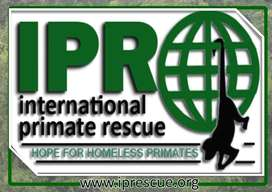 Primate carers needed