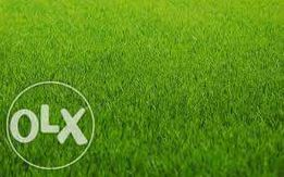 Семена газонных трав (суміш газонна) -универсальный