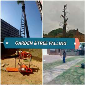 Professional and efficient tree felling