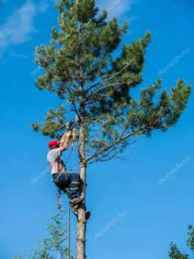 Exclusive tree cutting and removal