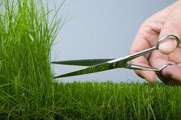 Покос травы, сорняка по городу Канев и району.