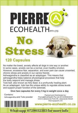 No stress for dogs