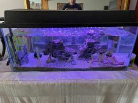115L Fully Equiped Tropical Fish Tank For Sale Fish