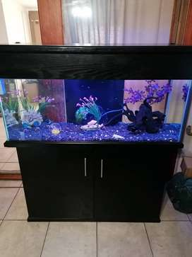 Fish tank with built In filter very good condition basically new