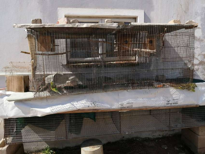 Bird cages for sale 0