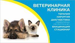 """Ветеринарная клиника """"Profi-VET"""" Вышгород, Ветеринар"""