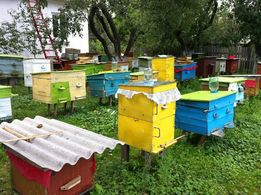 Бджоли, пчелы, отводки