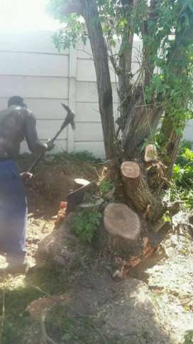 Tree cutting projects