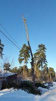 Спил, удаление, обрезка деревьев любой сложности, услуги бензопилы