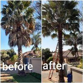 Tree felling rubble removals instant lawn's