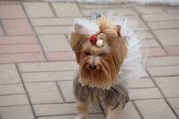 Стрижка собак Левый парк Веселка