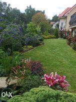 Usługi ogrodnicze - projektowanie oraz zakładanie ogrodów
