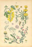 KWIATY 1885 r. - ZIELNIK reprodukcje XIX w. grafik na ścianę