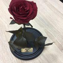 Роза в колбе / вечная роза / стабилизированная роза + подарок!