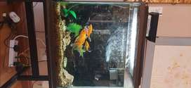 Gold fish + accessories for sale