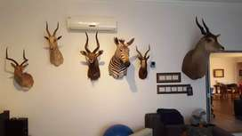 Hunting: Trophies to sell