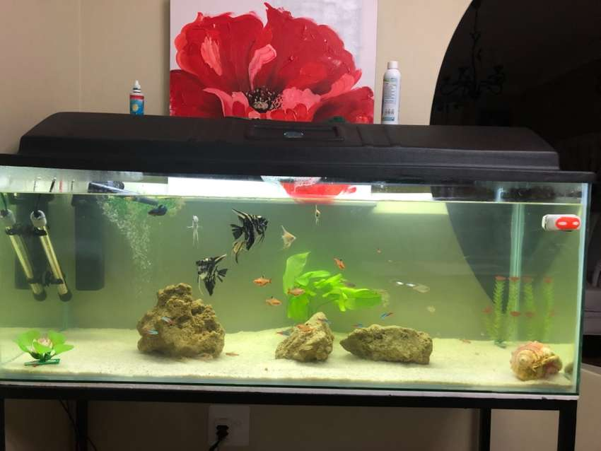 4ft Fish Tank for Sale.