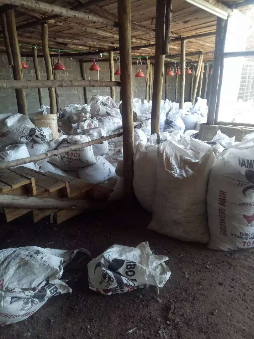 Chicken manure (Chick mash and growers) 0