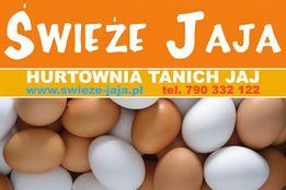 Jaja-Hurtownia Jaj-Leszno,Śmigiel,Kościan,Stęszew,Luboń,Poznań,Kórnik