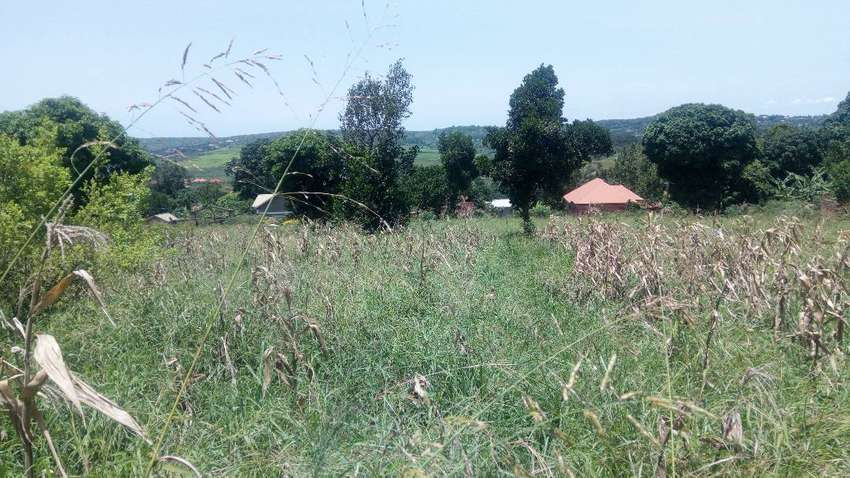 Masaka road  100acres on sale at kamengo 500mtrs from main wz titlle 0