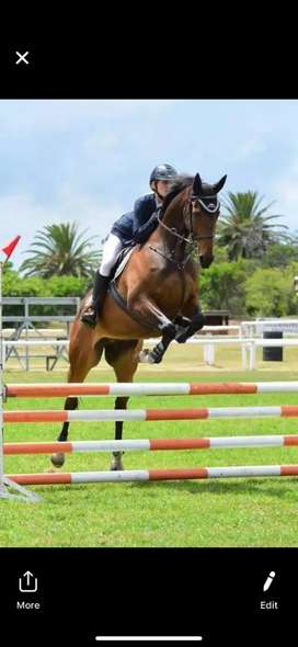 Graded showjumper for sale / home lease