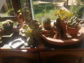 Bonsai Pots several to pic from