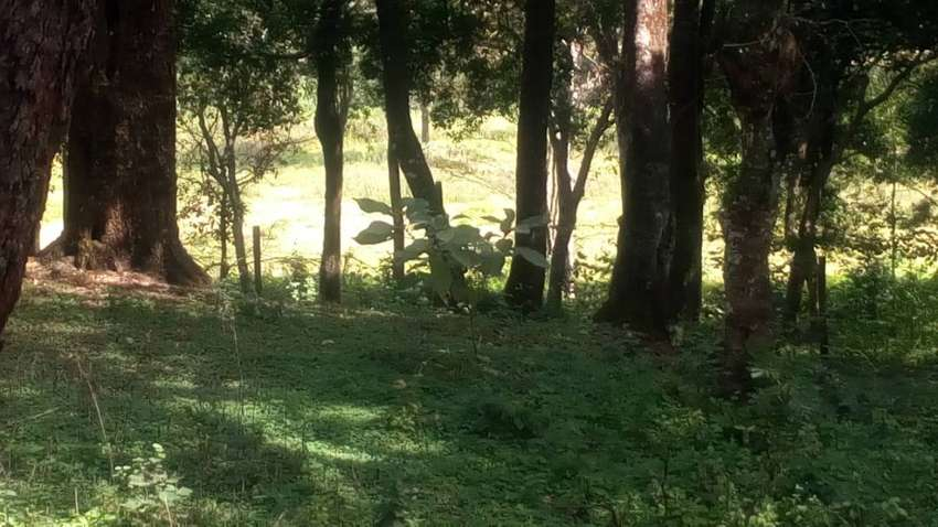5Acres On sale Old Muthaiga at 1.2Billion Kshs. Call us today. 0
