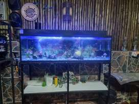 Fish Tank with Fish and more.
