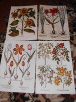 ZIELNIK XVIII w. - Kwiaty reprint grafik do wystroju