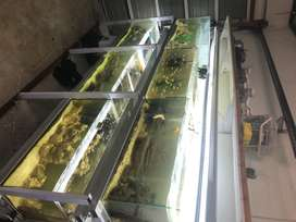 Fish room for sale