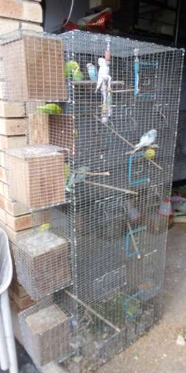 Aviary and Birds for Sale