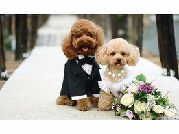Инструктор по вязке собак, вязка собак Днепропетровск