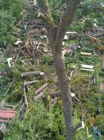 Удаление деревьев, Цена., срез деревьев и веток, альпинизм