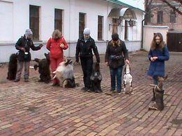 Дрессировка собак в Киеве