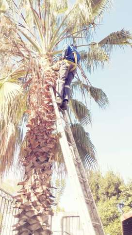 Garden and landscaping,Tree felling and palm tree tidy up