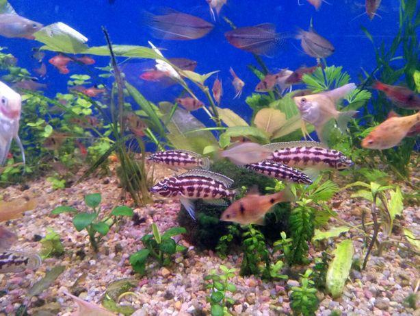 аквариумные рыбки, растения, оборудование,зоомагазин аквариумистики Харьков - изображение 7