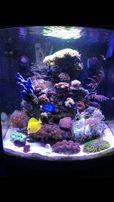 Akwarium morskie kompletny zestaw Olsztyn sklep Pirania