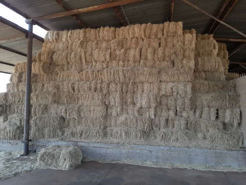 Teff for sale 0