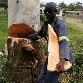 Tree felling and site clearance in Ballito by African Sunshine