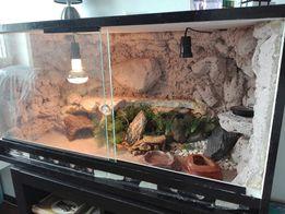 Terrarium 90x60x60 z pełnym wyposażeniem i 1 jaszczurką