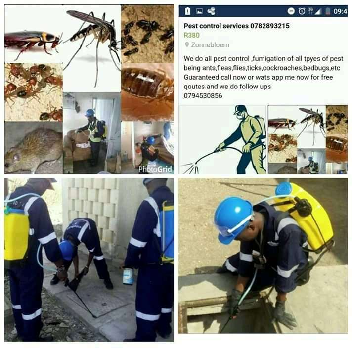 Fumigation and pest control 0