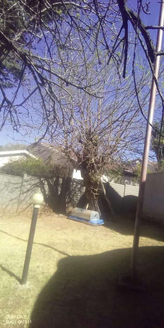 Rubble and furniture removal and also tree felling 0