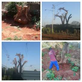 Tree felling,pulm prunning,tree stump removal